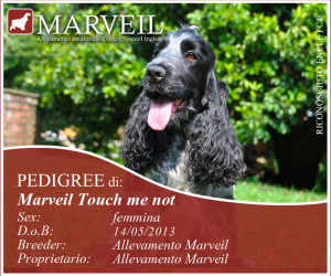 Marveil-Touch-me-not